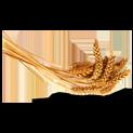 екстракт от пшеничен зародиш