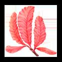 екстракт от червени водорасли
