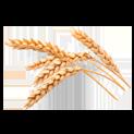 пшенични протеини