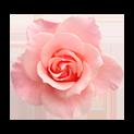 розов хидролит